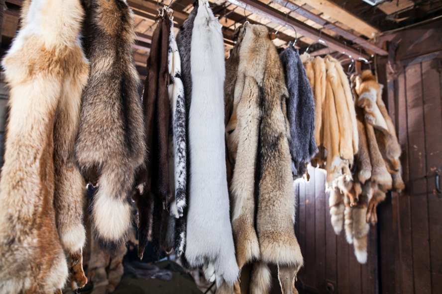 Fur Ban in Los Angeles, USA. Ditch Fur
