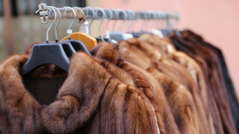 It's No More Fur For Los Angeles 2