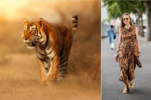 More Animal Prints to Covet - The Spotlight on Tiger Prints - Featured Image