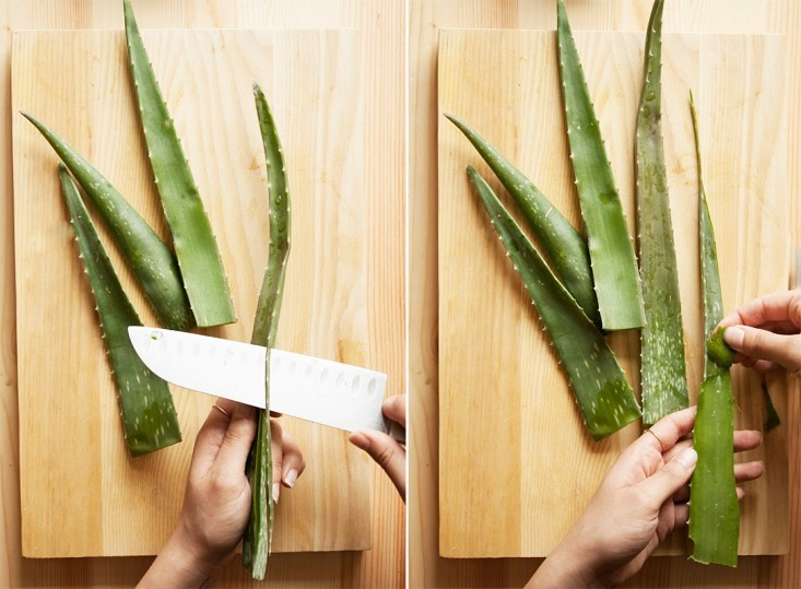 Reasons-Why-You-Should-Stock-Up-On-Aloe-Vera-Infused-Products-1